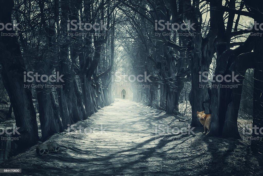 Halloween mystical background with dark forest stock photo