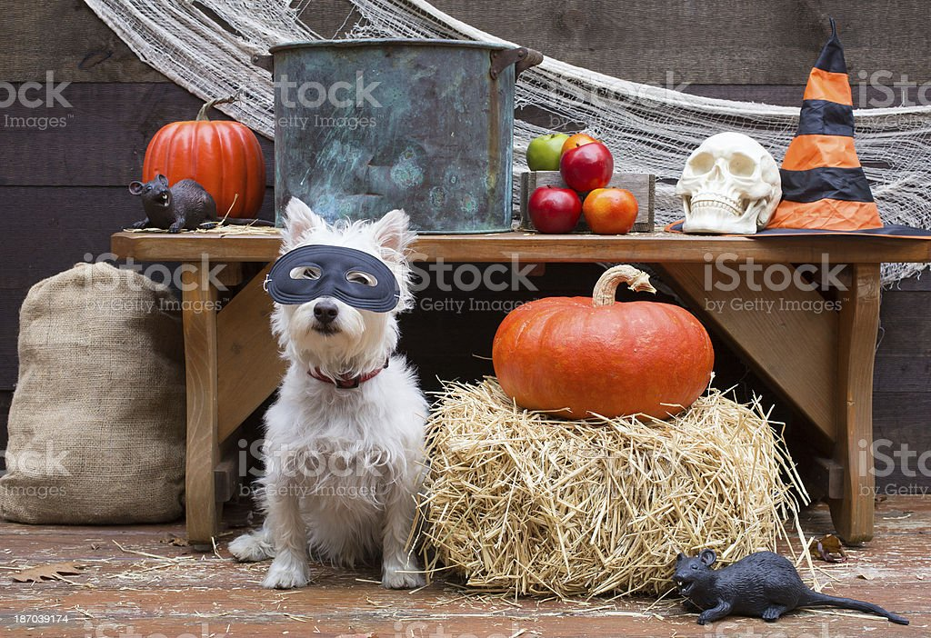 Halloween party dog stock photo