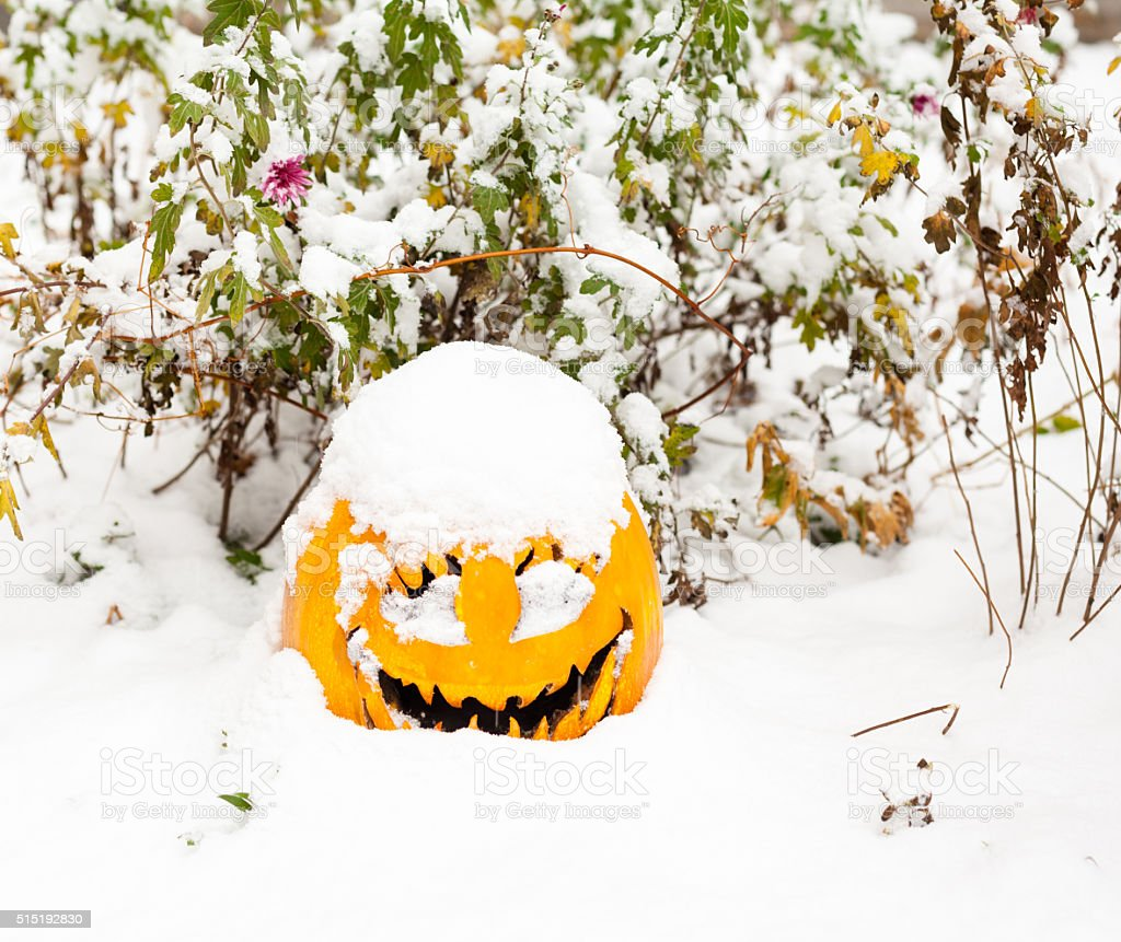 Halloween pumpkin in the snow stock photo
