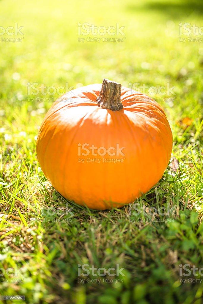 halloween pumpkin on the grass field stock photo