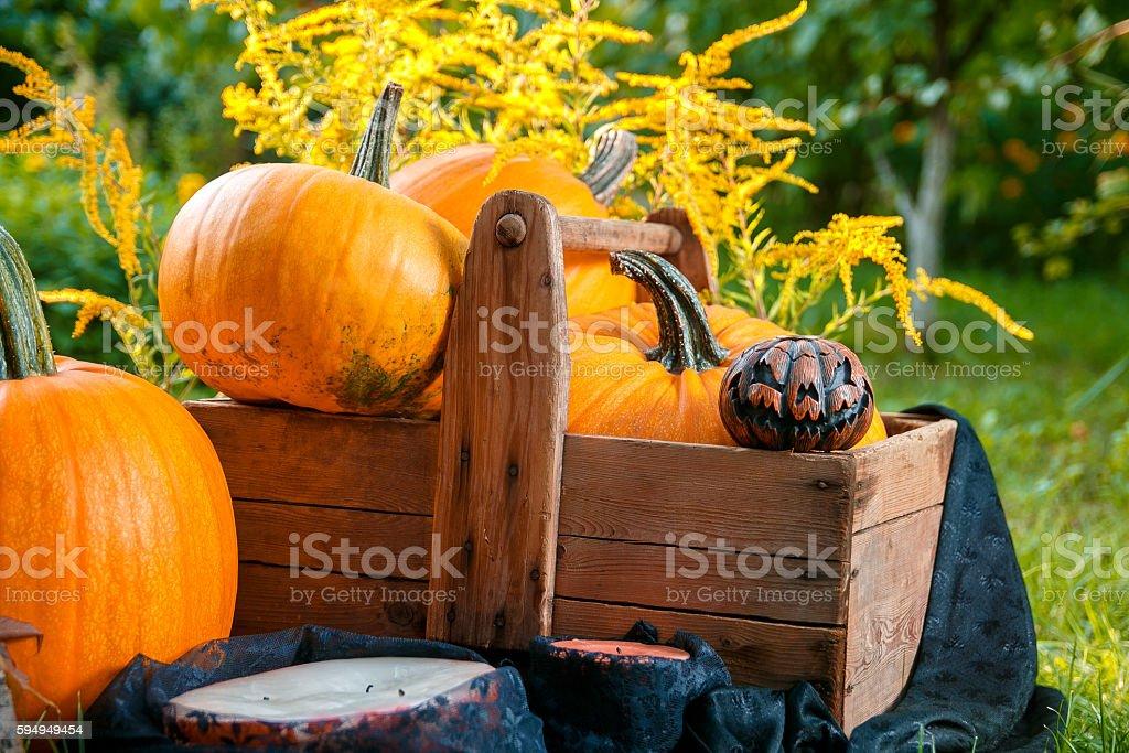 Halloween. Pumpkins in a box near Jack-o-Lantern stock photo