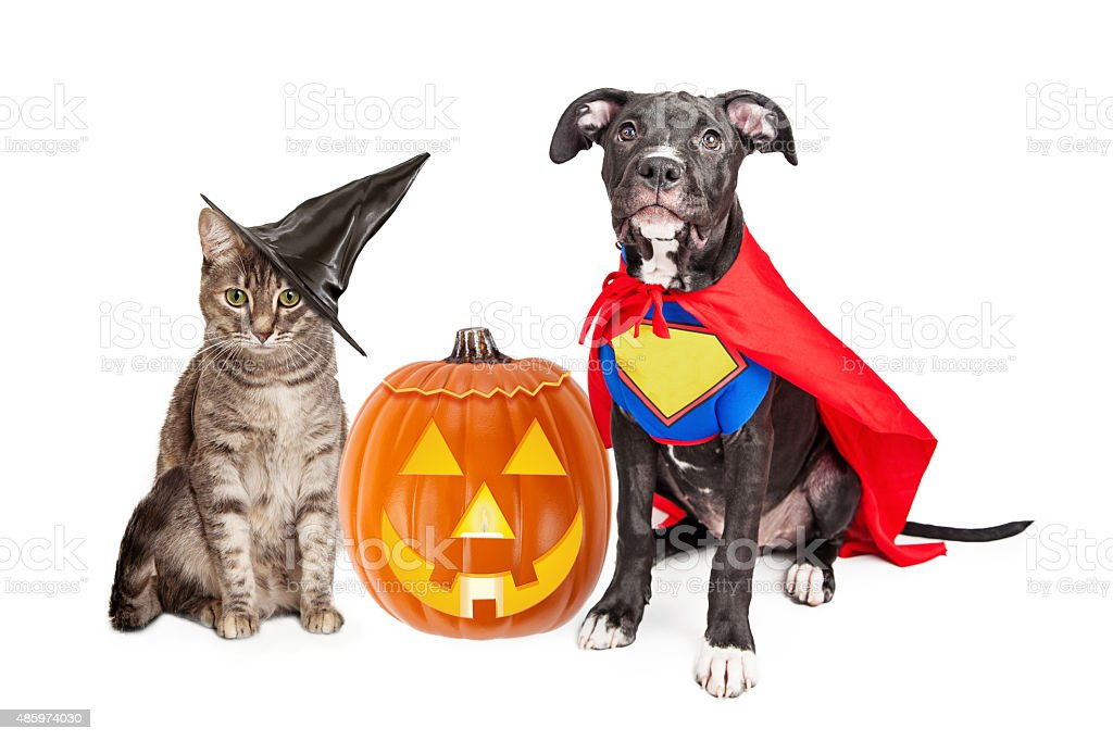 Halloween Puppy and Kitten With Pupmkin stock photo