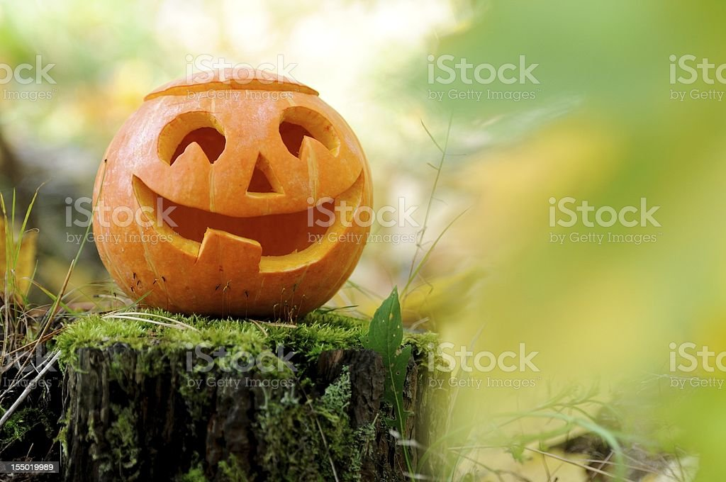 Halloween scary pumpkin in autumn forest royalty-free stock photo