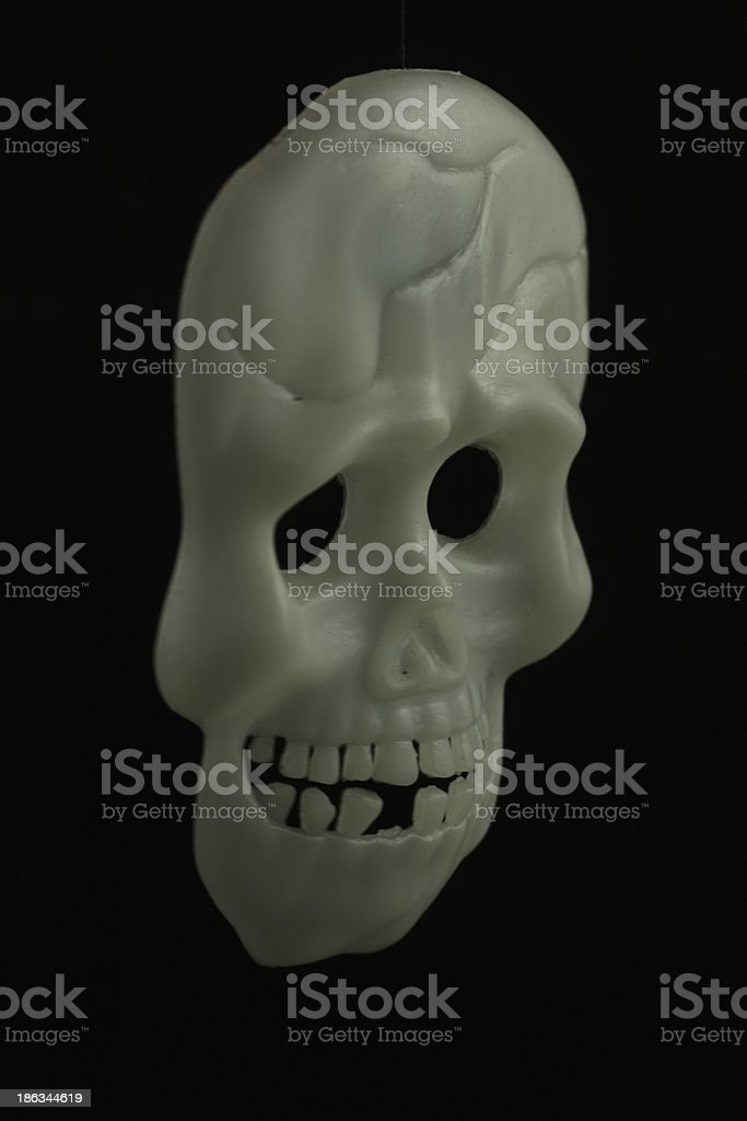 vector human bone human teeth human skeleton pictures, images and, Skeleton