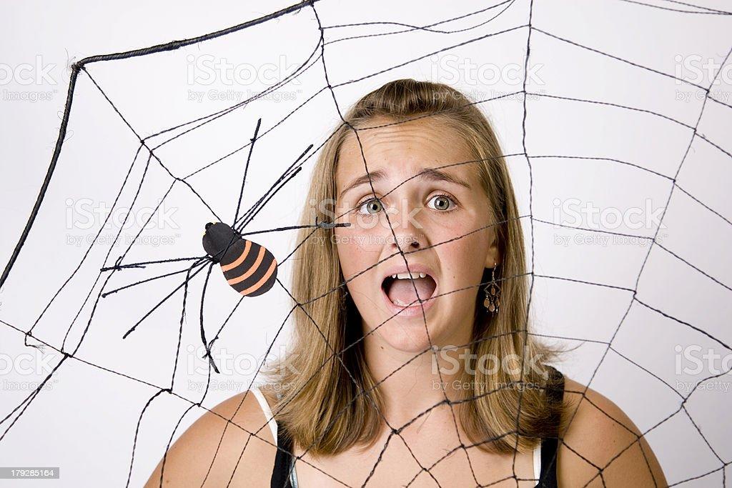 Halloween Spider Web 3 stock photo