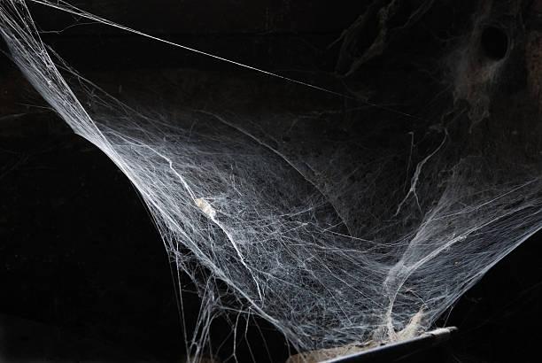 halloween spiderweb stock photo - Spider Web Halloween