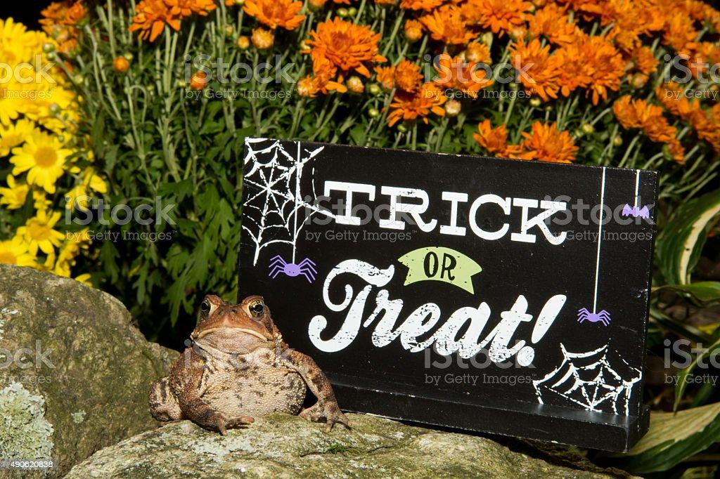 Halloween Toad stock photo