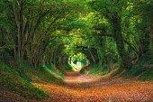 Halnaker Tree Tunnel, West Sussex