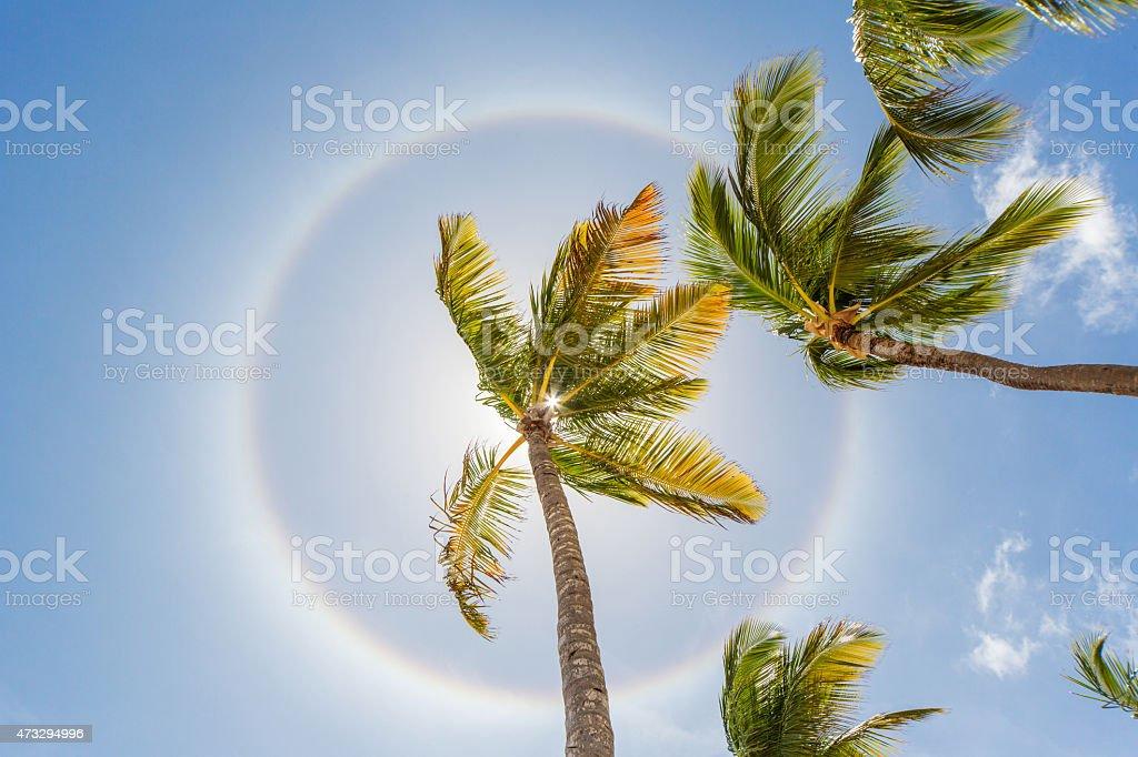 Halo Sun Ring, Palm Trees stock photo