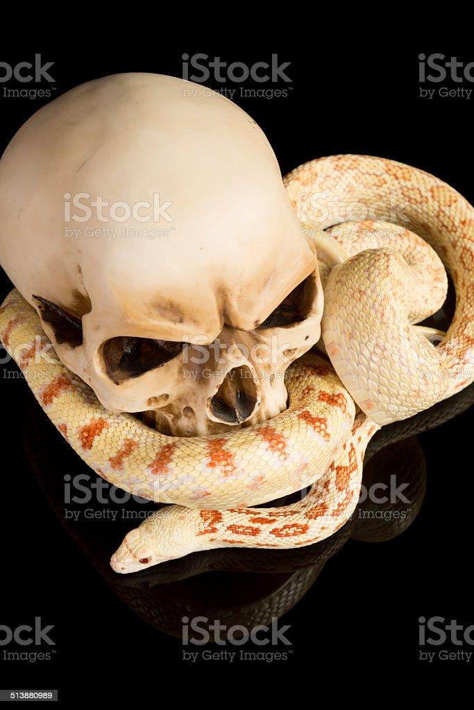 Haloween snake stock photo