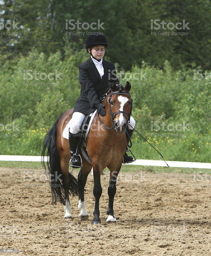Halt, salute, thank your pony... stock photo