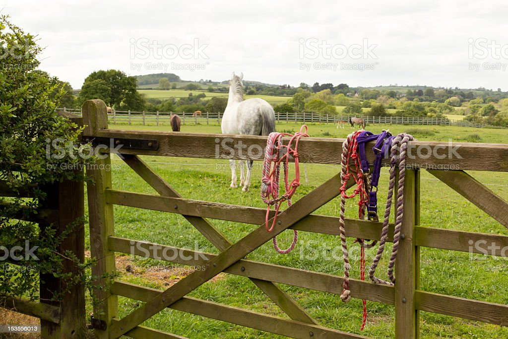 Halters and lead ropes hanging on gate after horse riding stock photo