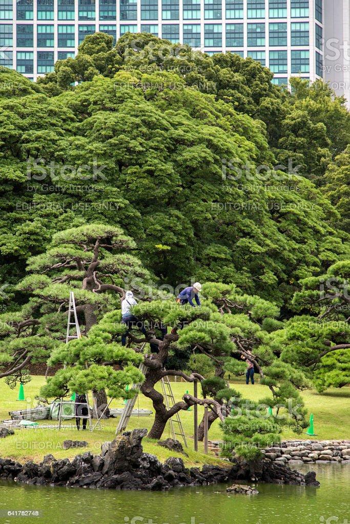 Hamarikyu Gardens in Tokyo stock photo