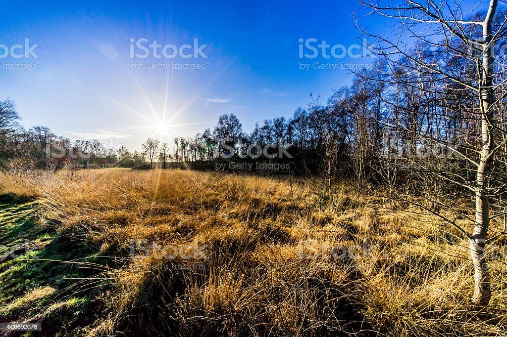 Hamburg Wittmoor stock photo