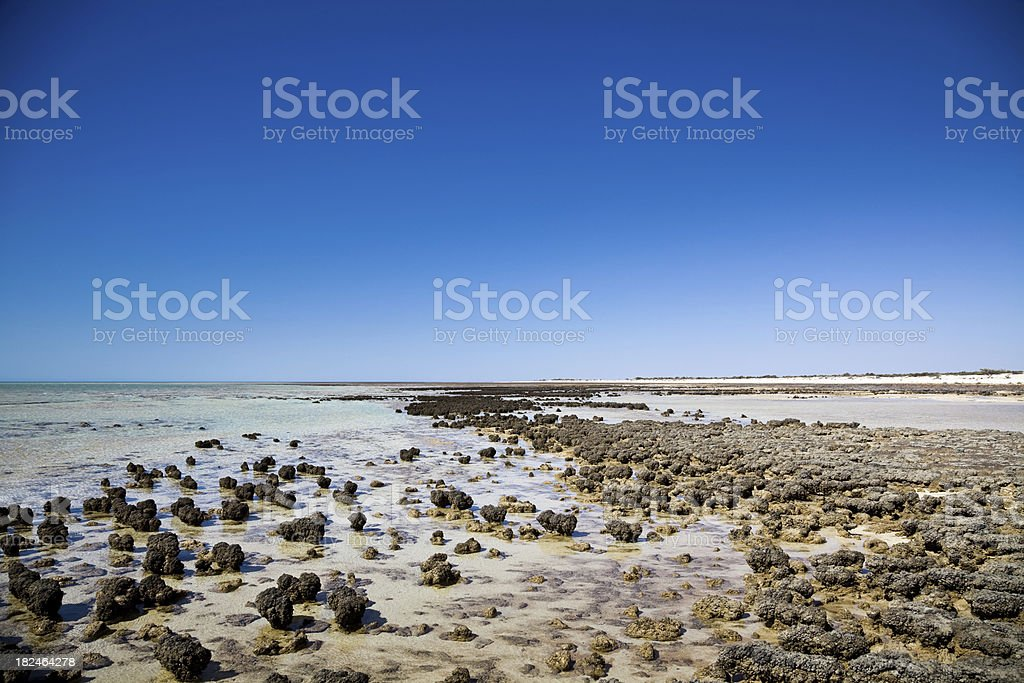 Hamelin Pool Stromatolites Shark Bay Australia stock photo