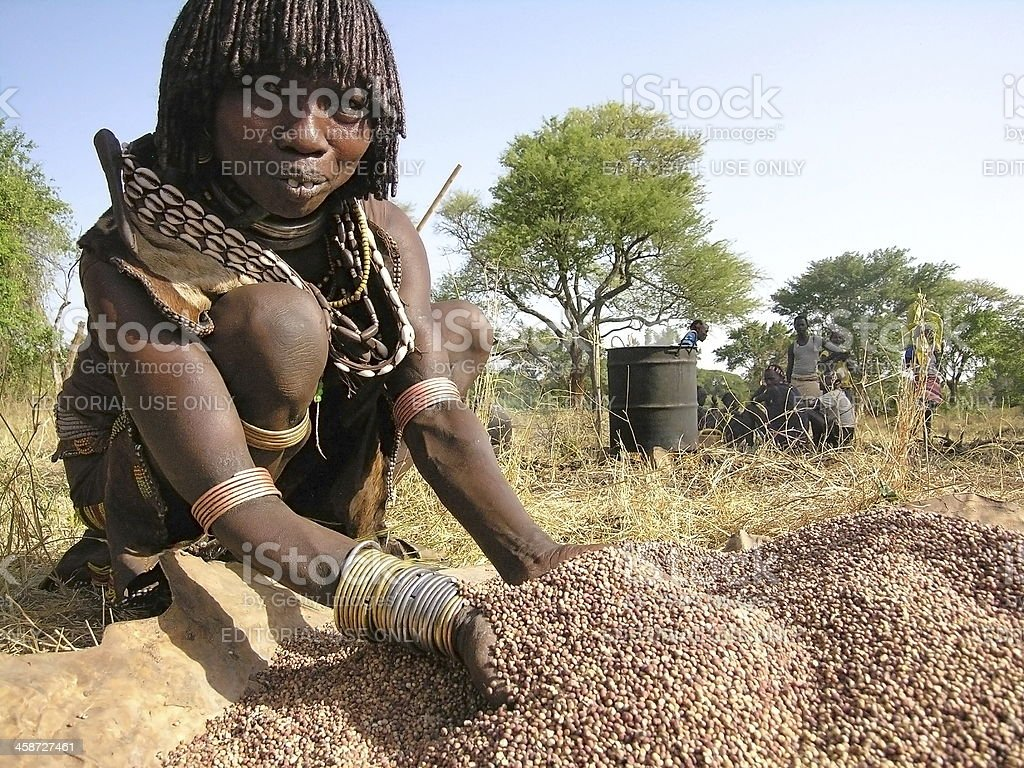 Hamer woman prepares sorghum for making traditional beer. stock photo