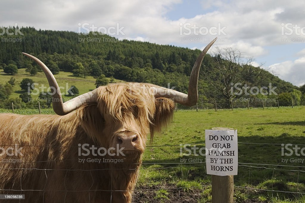 Hamish and his horns royalty-free stock photo