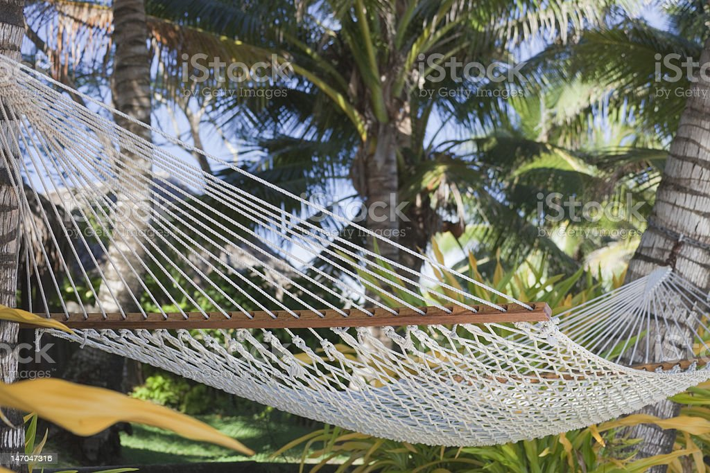 Hammock between Palm Trees royalty-free stock photo