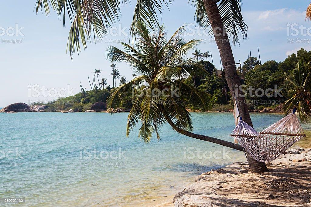 Hammock on the beach stock photo