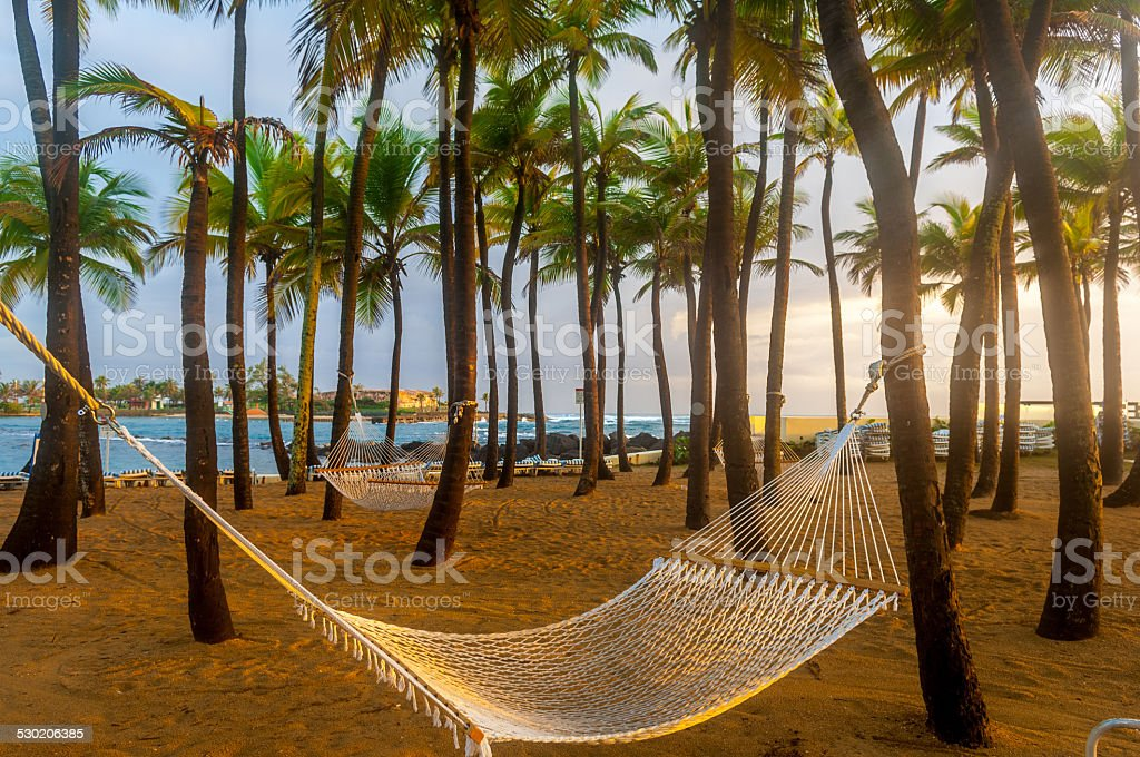 Hammock suspended from Palm trees stock photo