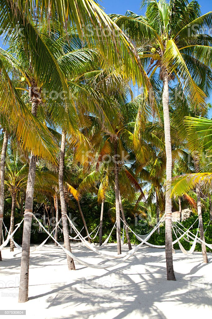 Hammocks streched between palm trees on a beach stock photo