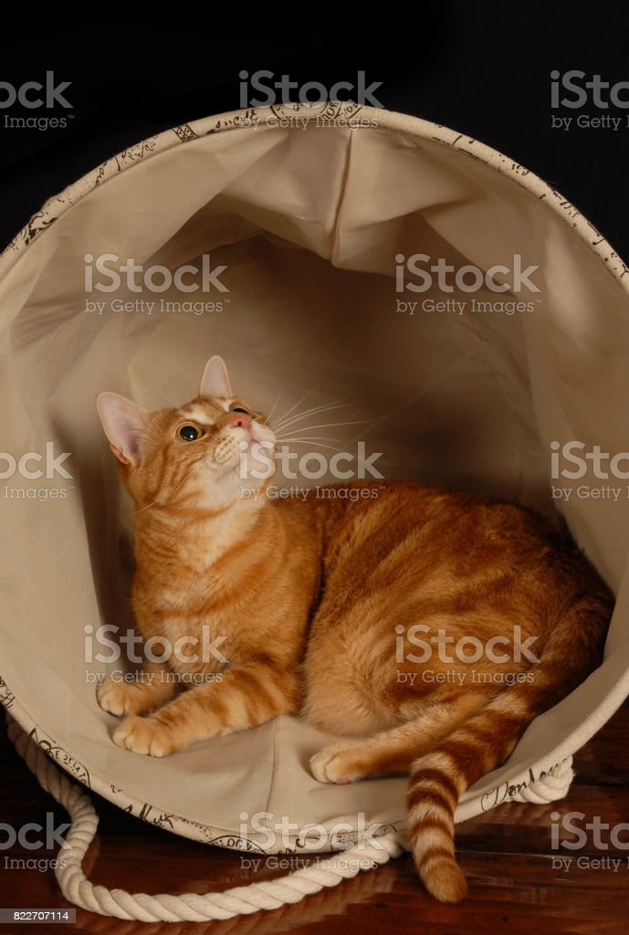 Hamper Cat stock photo