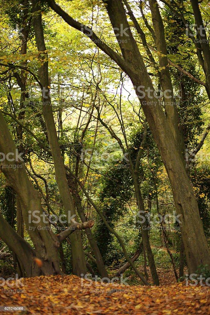 Hampstead Heath in Autumn stock photo