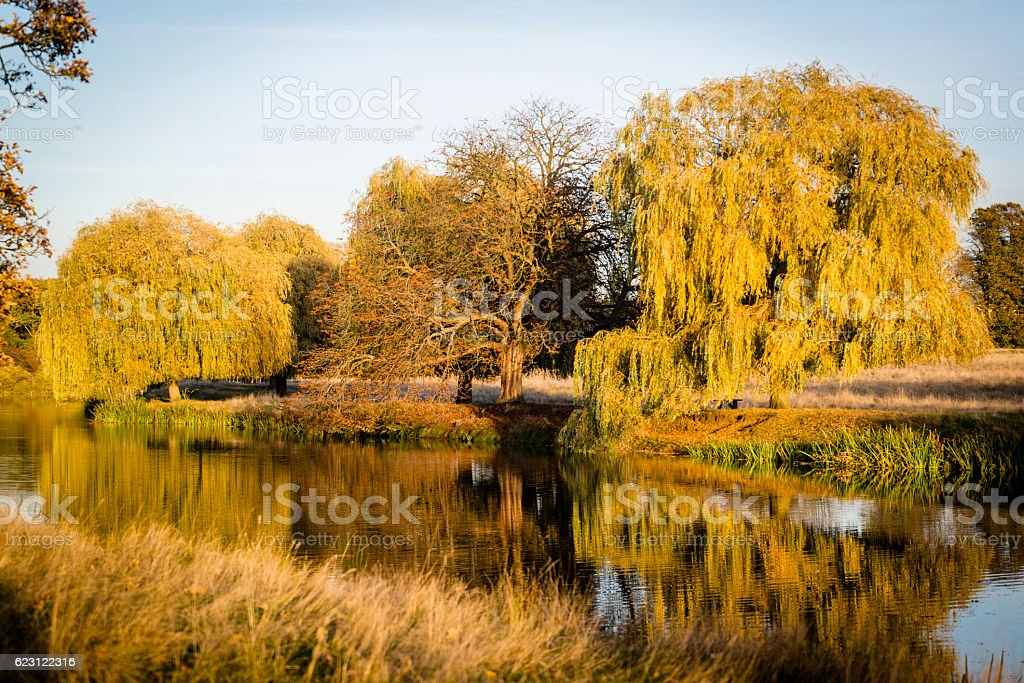 Autumn Lake Water England Kingston Upon Thames Hampton Wick Pond In Home Park