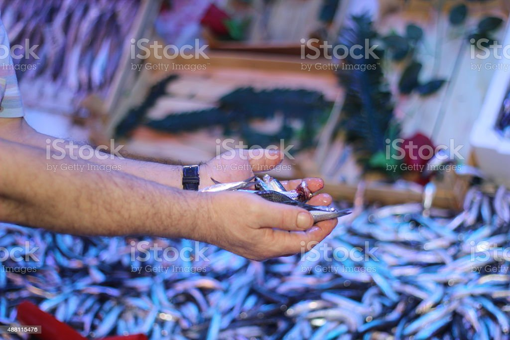 Hamsi fish in the hand stock photo