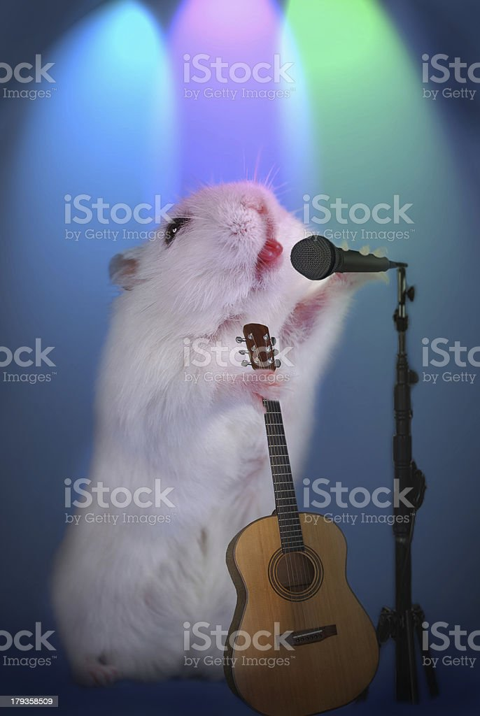 hamster as  music star with microphone and guitar stock photo