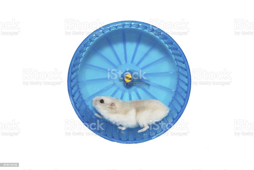 hamster in the wheel stock photo