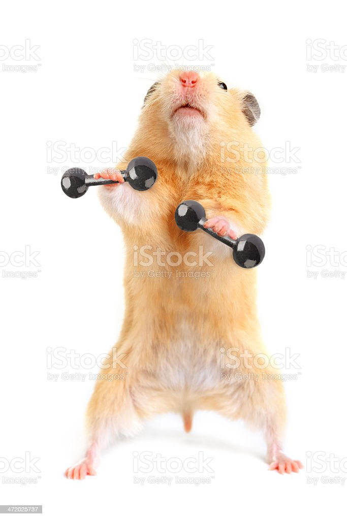 Hamster with bar stock photo
