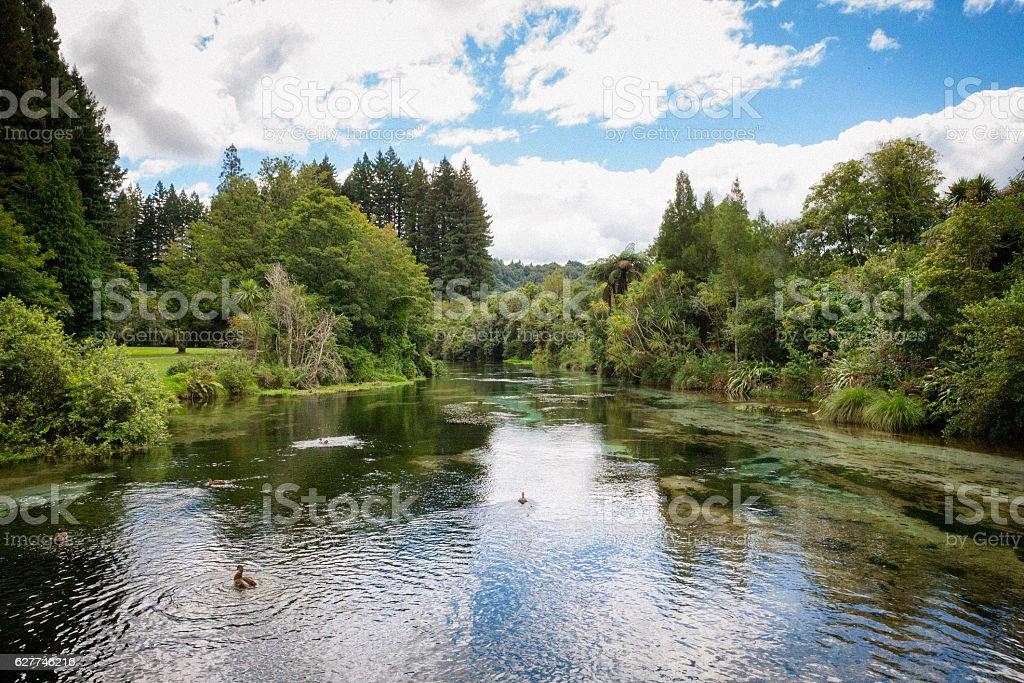 Hamurana Stream in Hamurana Springs, New Zealand stock photo