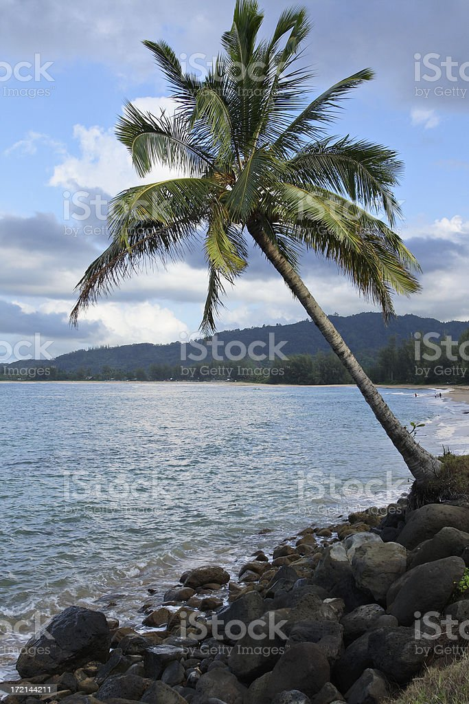 Hanalei Bay Palm Tree royalty-free stock photo