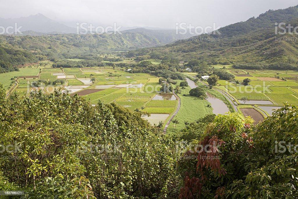 Hanalei Kauai Taro Fields And Wildlife Refuge stock photo