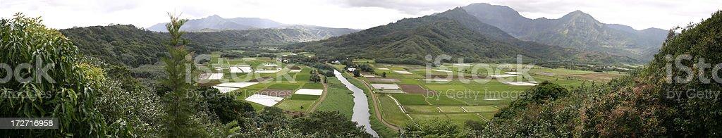 Champ de vue panoramique de Hanalei Taro photo libre de droits