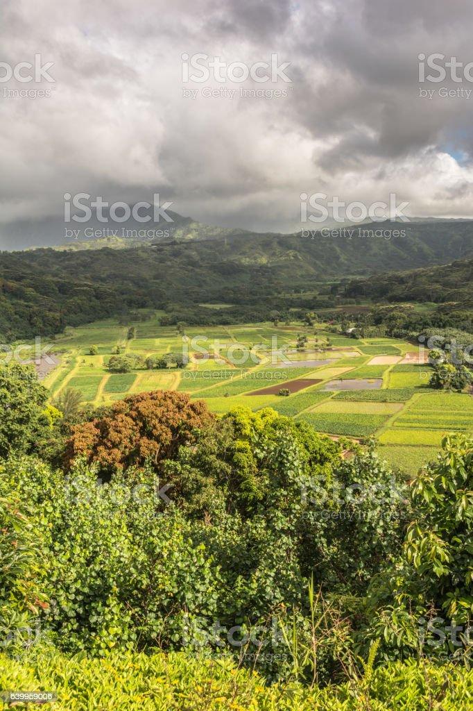 Hanalei Valley Lookout , Kauai, Hawaii stock photo