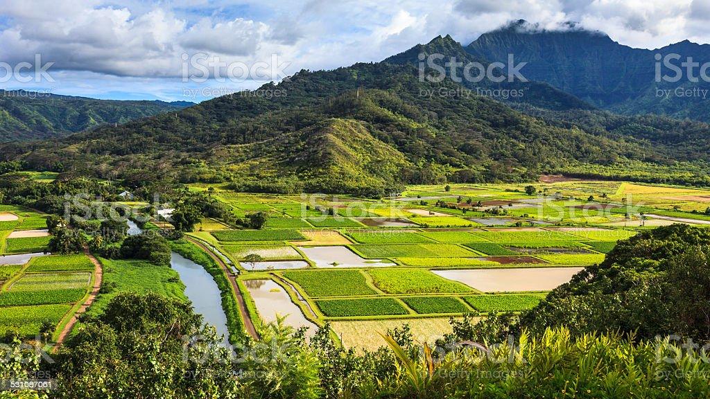 Hanalei Valley Panorama stock photo