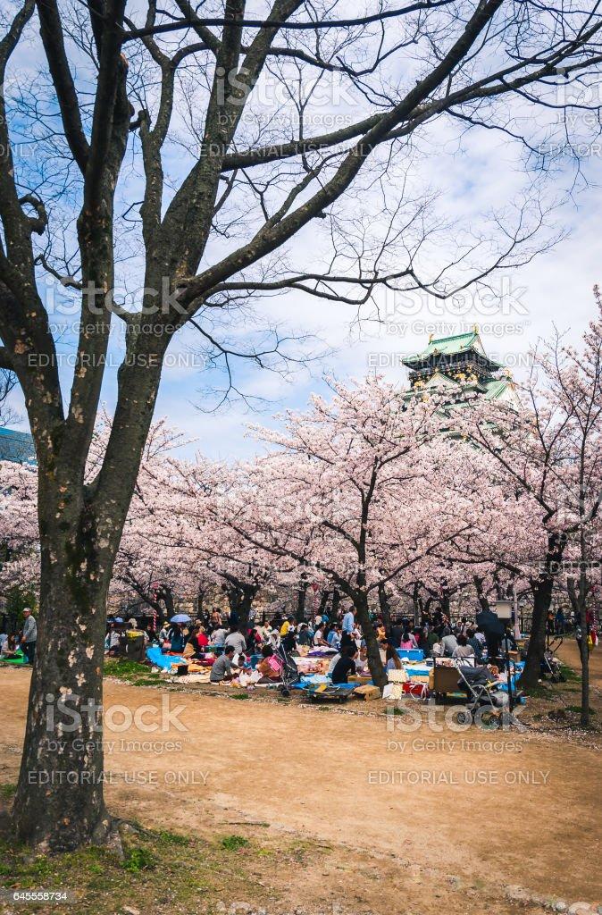Hanami picnics at Osaka Castle stock photo