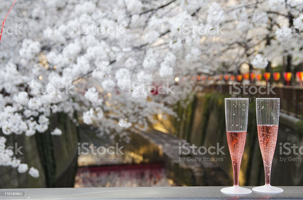 Hanami royalty-free stock photo