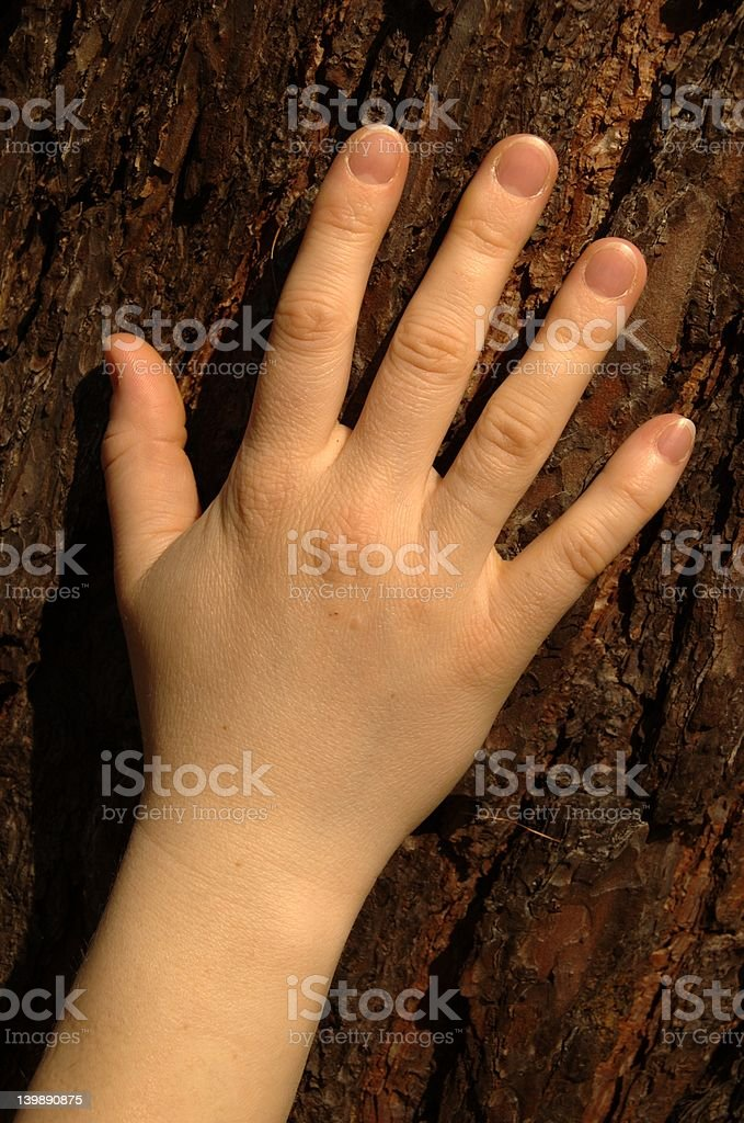 Hand against bark royalty-free stock photo