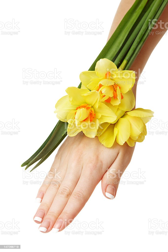 Hand and daffodils royalty-free stock photo