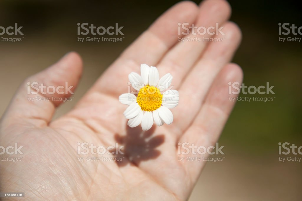 Hand and flower stock photo