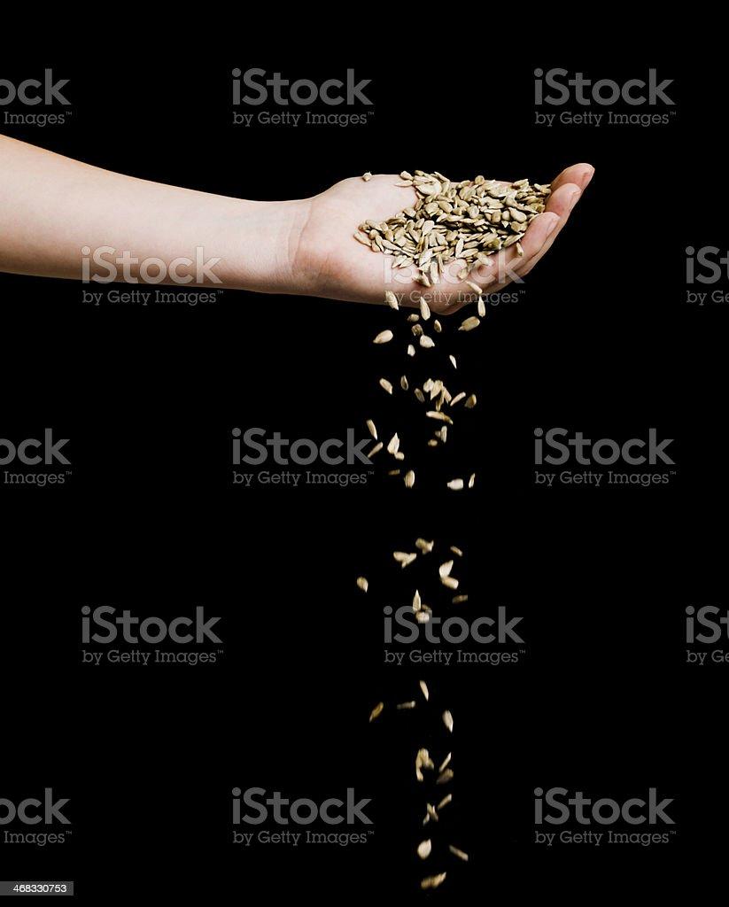 Hand and Grain stock photo