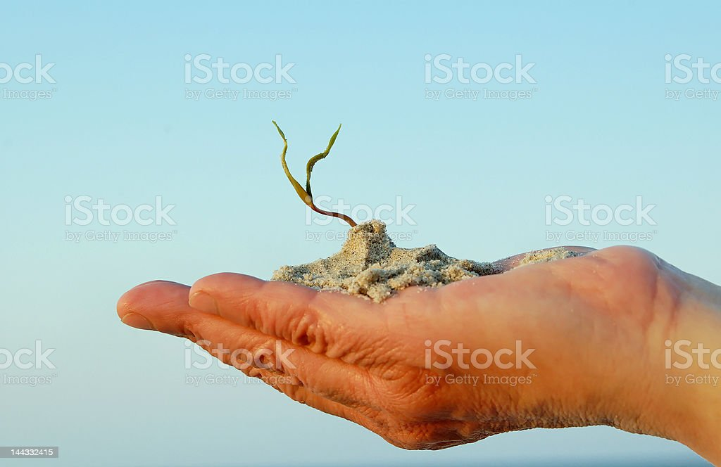 hand and plant royalty-free stock photo