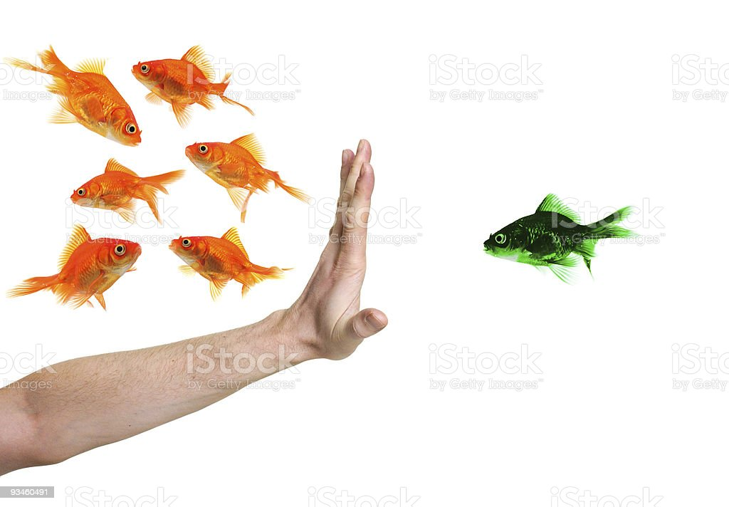 hand discriminating green goldfish stock photo