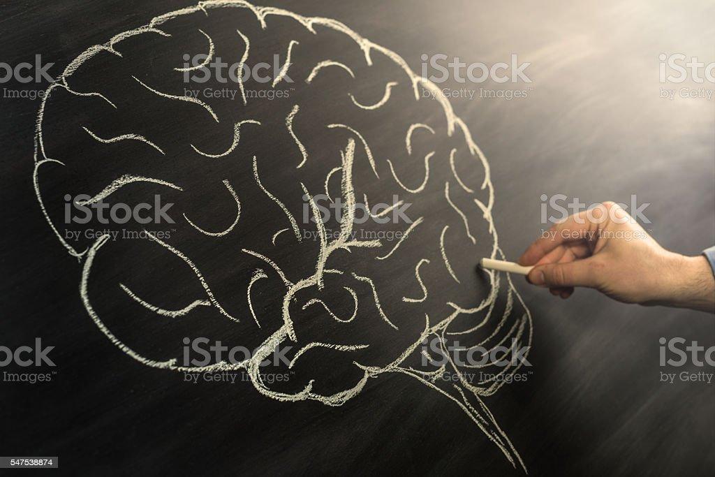 hand drawing a  human brain on blackboard stock photo