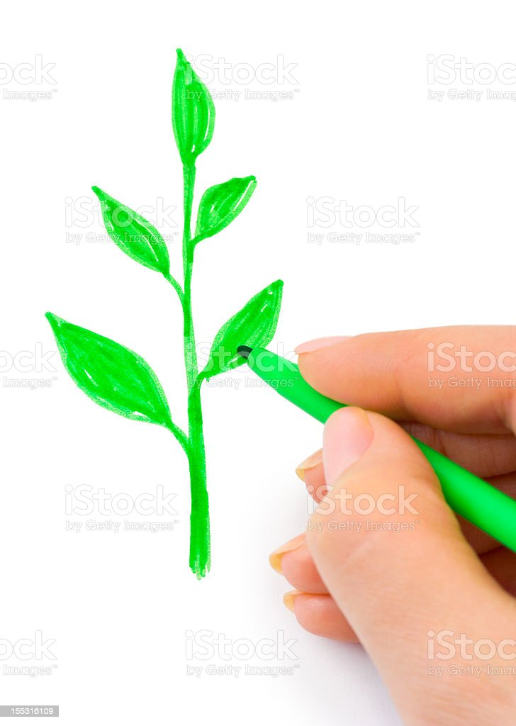 Hand drawing plant royalty-free stock photo