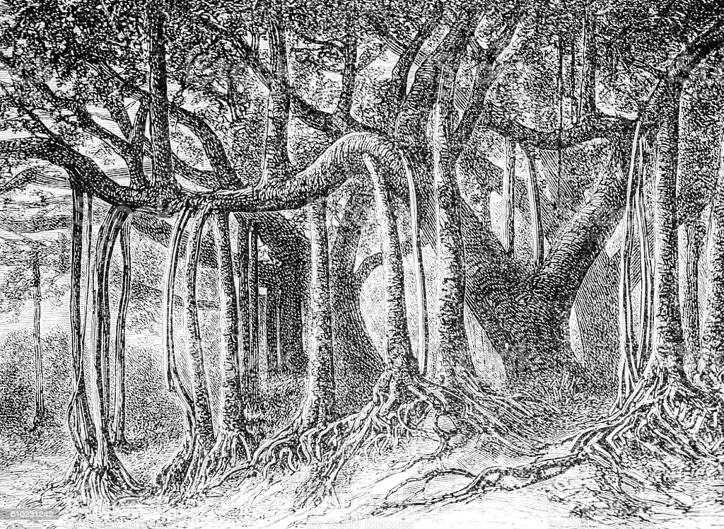 Hand drawn illustration of a mangrove forest stock photo
