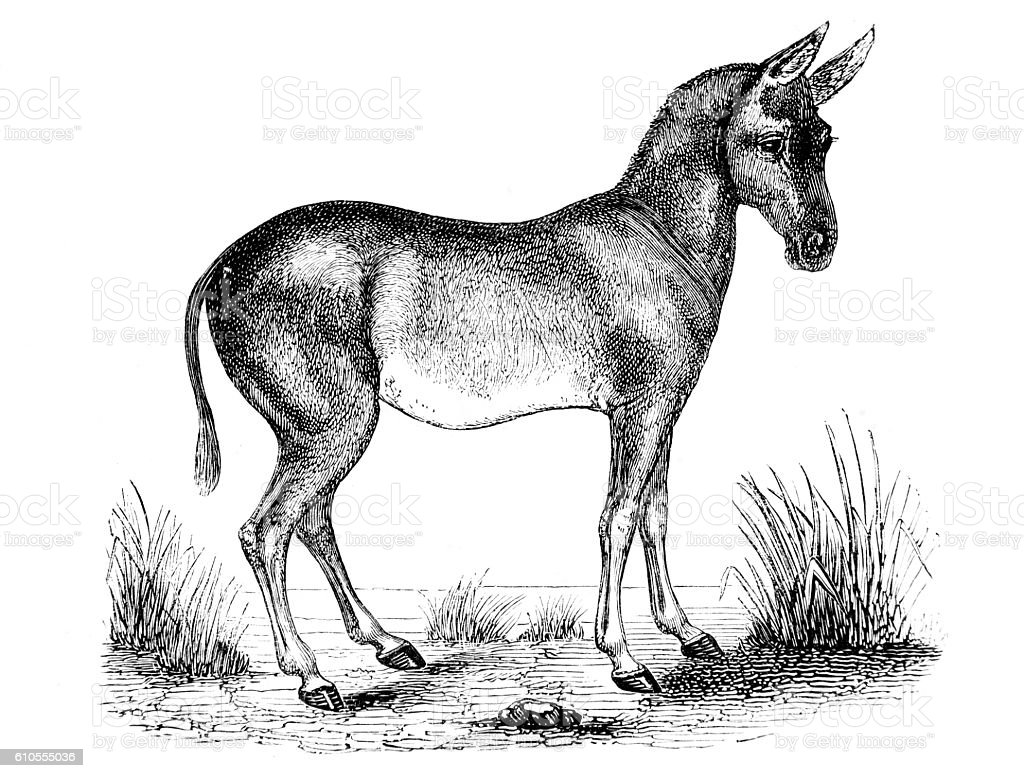 Hand drawn illustration of a pony horse stock photo